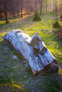 Free Abandoned Log In The Forest Royalty Free Stock Photo - 18738255