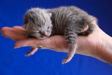 Free Sleeping Kitten Stock Photo - 18732070