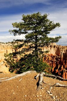 Free Bryce Canyon Royalty Free Stock Photography - 18732747