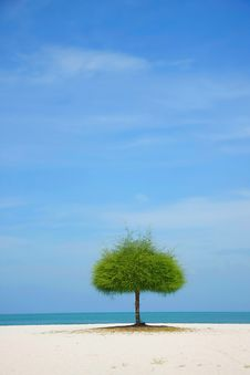 Free Alone Green Tree On Beach Stock Images - 18733394