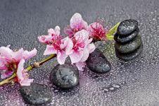 Free Zen Stones Stock Photos - 18733433