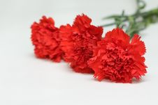 Free Three Red Carnations Stock Photo - 18733610