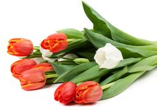 Bouquet Of Red Tulips Stock Photo