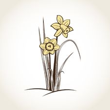 Free Spring Daffodils. Stock Photo - 18734360
