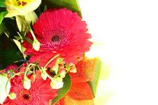 Free Flower Border Royalty Free Stock Photo - 18734975