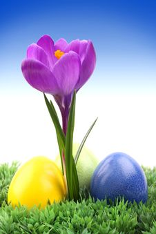Free Crocus With Easter Eggs Royalty Free Stock Photos - 18736428