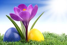 Free Crocus With Easter Eggs 2 Royalty Free Stock Photos - 18736438