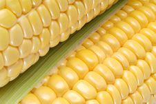 Free Corn Stock Photo - 18738160
