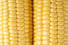 Free Corn Stock Image - 18738171
