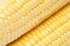 Free Corn Royalty Free Stock Image - 18738186
