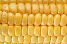 Free Corn Stock Photography - 18738202