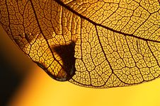Free Yellow Decorative Leaf Stock Image - 18742801