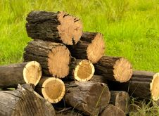 Logs Cut With Chainsaw For Winter Firewood Royalty Free Stock Photo