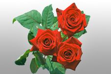 Free Bouquet Of Roses Stock Photography - 18745842
