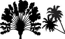 Free Exotic Palmtree Silhouette Stock Image - 18747131