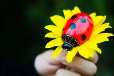 Free Ladybug Royalty Free Stock Images - 18747639