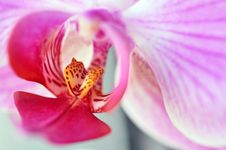 Free Orchid Inside Stock Photo - 18747850