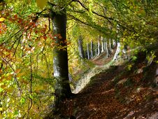 Path Through Beech Woods Royalty Free Stock Images