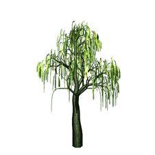 Free Beautiful Willow Stock Image - 18749211