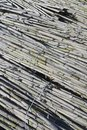 Free Reeds Stock Photos - 18750003