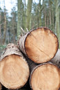 Free Deforestation - Stack Of Trunks Stock Images - 18753004