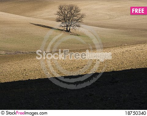 Free Countryside With Tree Stock Photo - 18750340