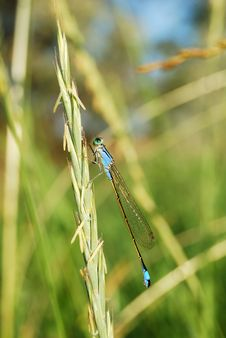 Free Turquoise Color Dragonfly Stock Photos - 18750753