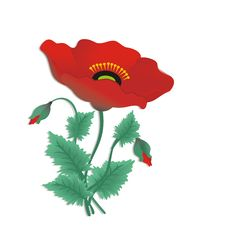 Free Red Poppy Royalty Free Stock Images - 18752019