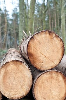 Free Deforestation - Stack Of Trunks Stock Images - 18753004