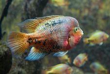 Free Exotic Fish Royalty Free Stock Photo - 18753995