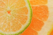 Free Sliced Citrus Stock Photos - 18754683