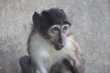 Free Monkey Looks Me Stock Photos - 18755733