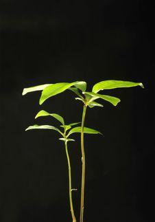 Free Seedling, Royalty Free Stock Images - 18757379