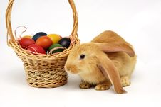 Free Easter Rabbit Royalty Free Stock Photography - 18759407