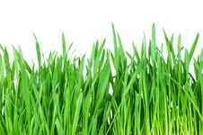 Free Fresh Green Grass Isolated On White Royalty Free Stock Images - 18759959