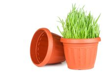 Free Green Grass In A Pot Isolated On A White Royalty Free Stock Photos - 18759978