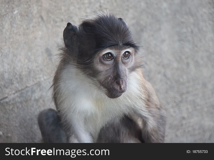 Monkey looks me