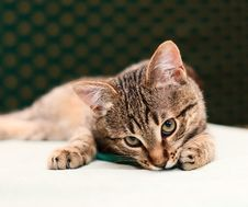 Cat Looking Into Camera Royalty Free Stock Photos