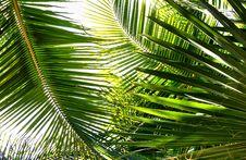 Free Palm Stock Photo - 18763310