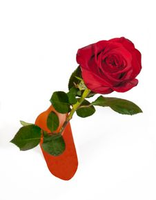 Free Red Rose In Vase Stock Photography - 18763482