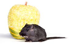 Free Mouse And Apple Royalty Free Stock Photo - 18763785