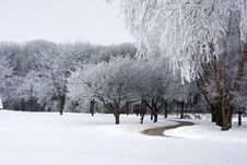 Free Fresh Snow On Park Trees Royalty Free Stock Images - 18764059