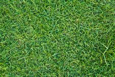Free Green Grass Lawn Royalty Free Stock Photos - 18764398