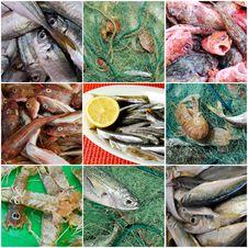 Free Fresh Fish Stock Photos - 18764513