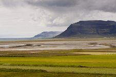 Free Green Meadow Vestfjord - Iceland Royalty Free Stock Image - 18766926