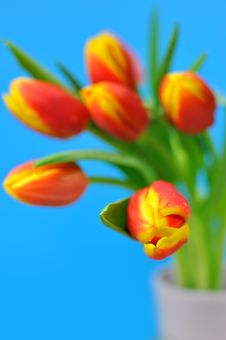 Free Tulips Royalty Free Stock Images - 18767239