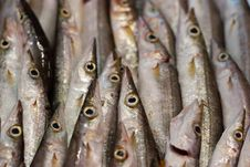 Free Fish At The Market Royalty Free Stock Image - 18767966