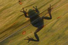 Free Frog Stock Photo - 18768500