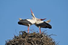 Free Storks Stock Photos - 18768713