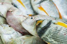 Free Fish At Market Stock Image - 18768821